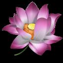 Flower – aranżacje ogrodowe